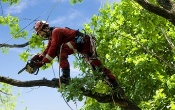 find trusted rated North Down tree surgeons