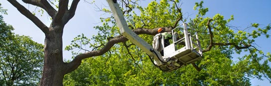 North Down tree surgery services