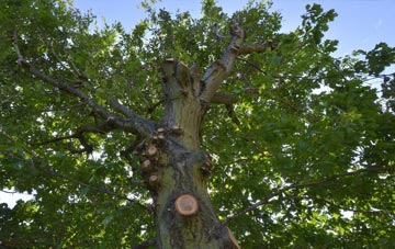 what is North Down tree surgery?